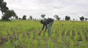 Fertiliser Subsidy: How Nigeria Short Changes Farmers