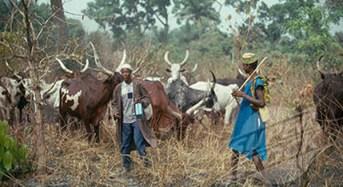 Nasarawa Sets Up Committee To Punish Erring Herdsmen