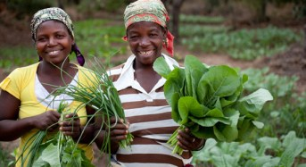 Nigeria makes more, promises less funding on agriculture, says Oxfam