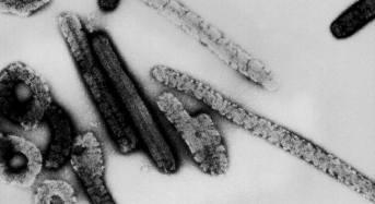 Deadly viral disease similar to Ebola breaks out in Uganda