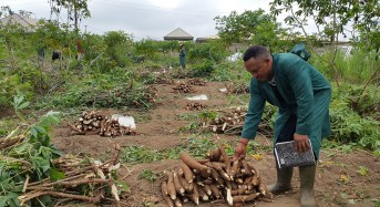 STUDY: Niger Delta farmers profited from naira devaluation in 2017