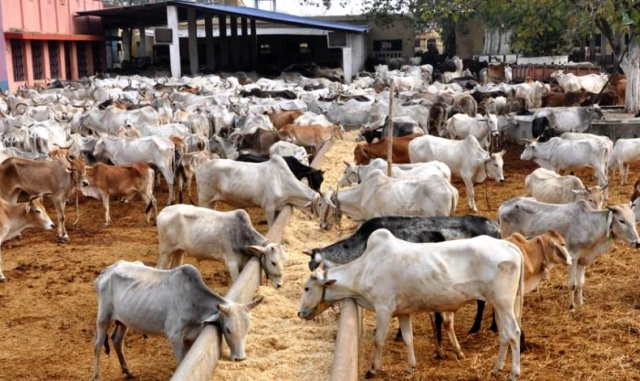 Sokoto's N3bn cattle ranch to solve herdsmen/farmer clashes — and much more