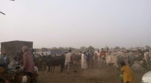 Ngurore Cattle Market, Yola South LGA, Adamawa State, where our correspondent bought cows and foodstuff for the investigation.