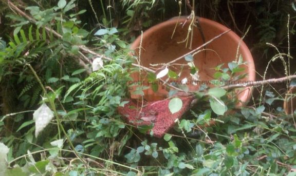 Abandoned bowl and carpet used by illegal miners in the Atewa forest