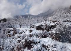 Apple Trees Laden With Snow In Kulu District Of Himachal: Photo By Garima Lohumi
