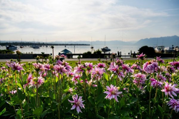 Morges In Switzerland's Canton of Vaud Welcomes