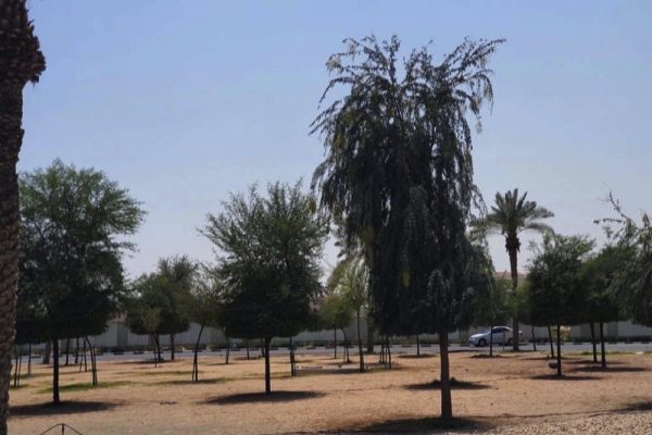 Give a gift of trees this Ramadan, urges Dake Rechsand.