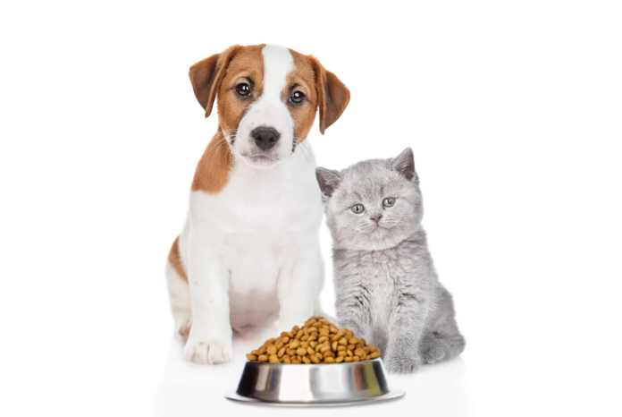 Responsible Pet Owner - Dog and Cat