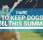 How To Cool Off Dogs in Summer