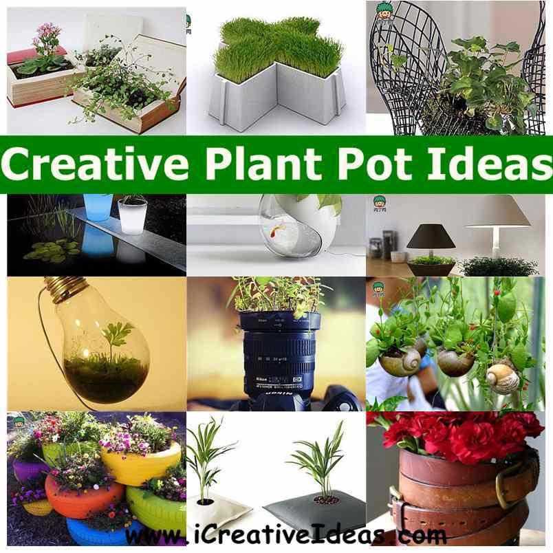 Can You Grow Plant Regular Light Bulb