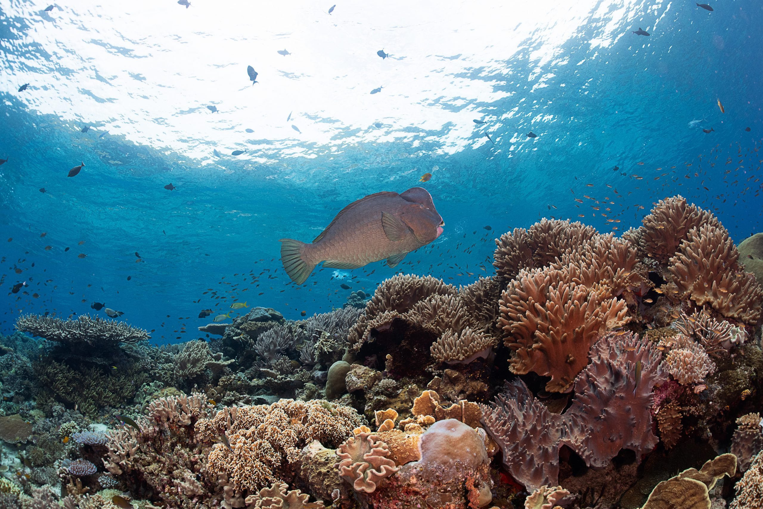 Coral Reef Conservation Fund Request For Proposals Icri