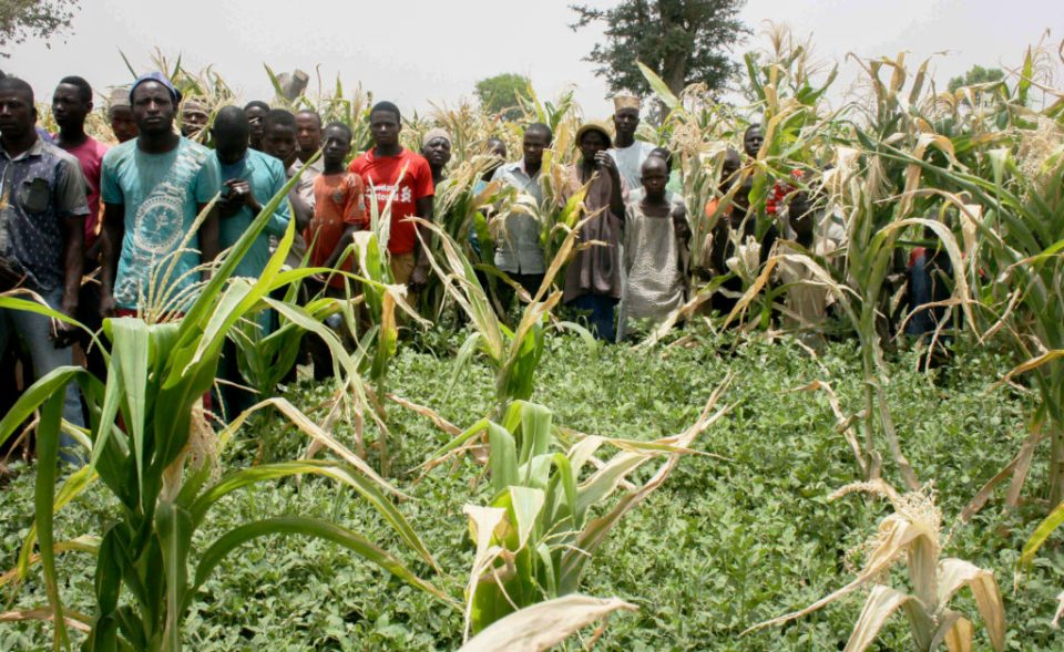 Participants during the farmers' field visit appreciating groundnut variety Samnut24. Photo: A Diama, ICRISAT