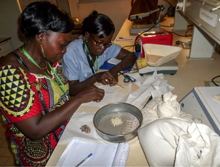 ICRA trainees in the seed laboratory. Photo: H Bissala ICRISAT
