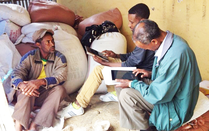 Researcher take survey to show chickpea improvement in Ethiopia