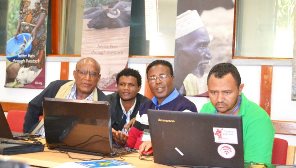 Writeshop participants discussing research data related to the Tropical Legumes project. Photo: ICRISAT