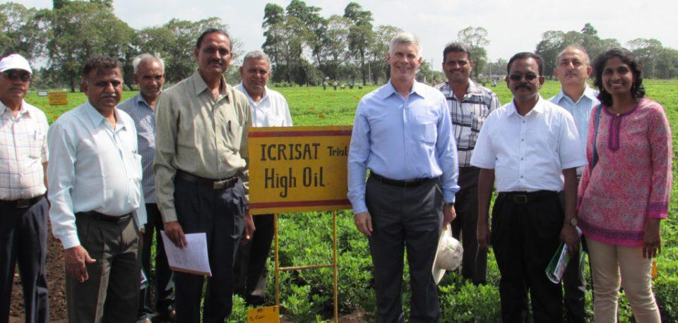 Dr Bergvinson and Dr Radhakrishnan, Director, ICAR-DGR visit high oil trial at Junagadh Agricultural University (JAU), Junagadh in August 2016 Photo: ICRISAT
