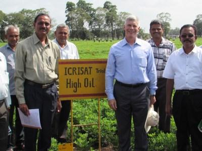 At groundnut field at ICRISAT-India. Photo: ICRISAT