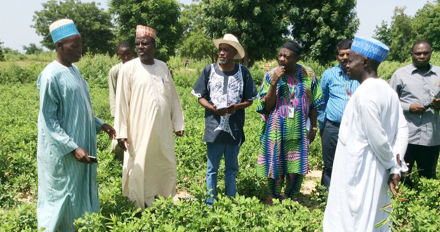 Scientists and ADP officials visit a groundnut cluster farm in Nigeria, 2016. Photo: ICRISAT
