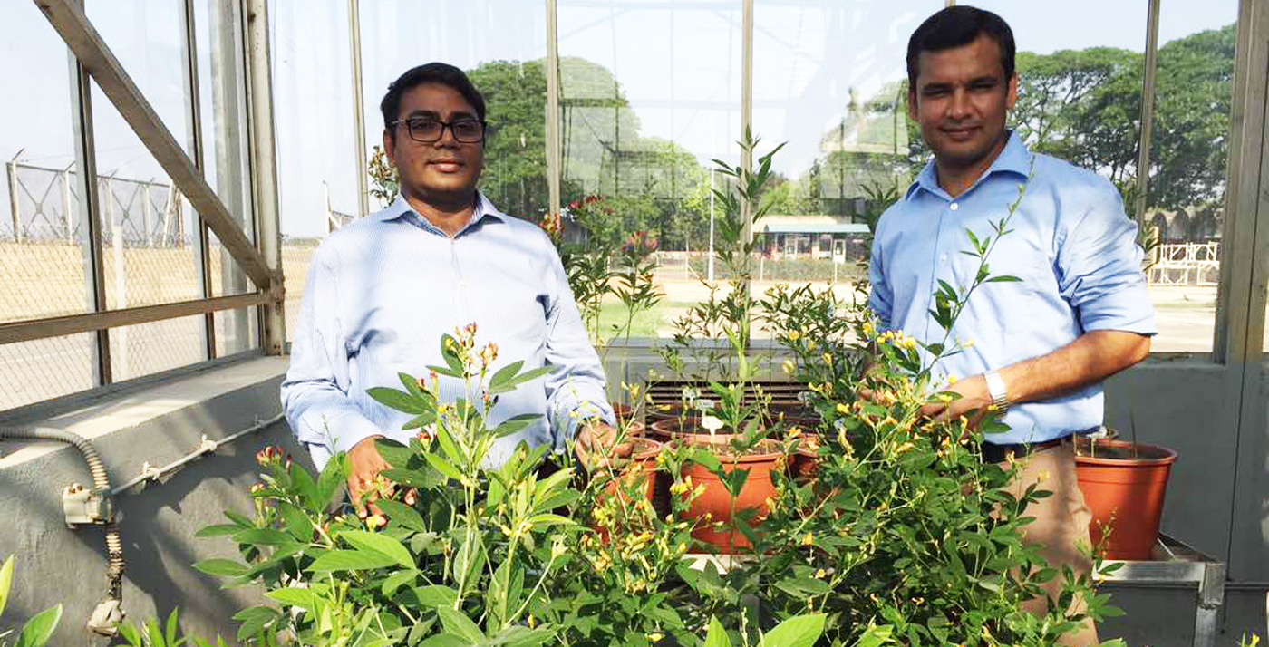 Dr Rajeev K Varshney Research Program Director and Senior Scientist Dr Rachit Saxena inspect pigeonpea accessions for agronomically important traits and disease resistance. Photo: S Sharma, ICRISAT