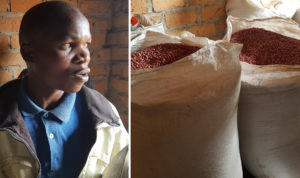 Chairperson of Tukwatirile Wamu Youth Seed Farmer Group with the harvest. Photo: A Essegbemon, ICRISAT