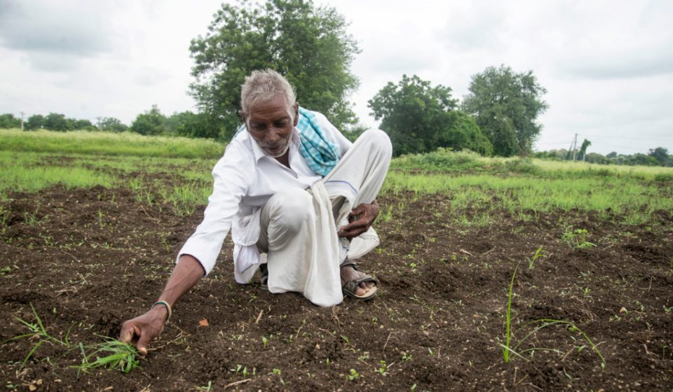 Treated wastewater means Serigudam Sailu can now grow coriander as an income source. Photo: S Punna, ICRISAT