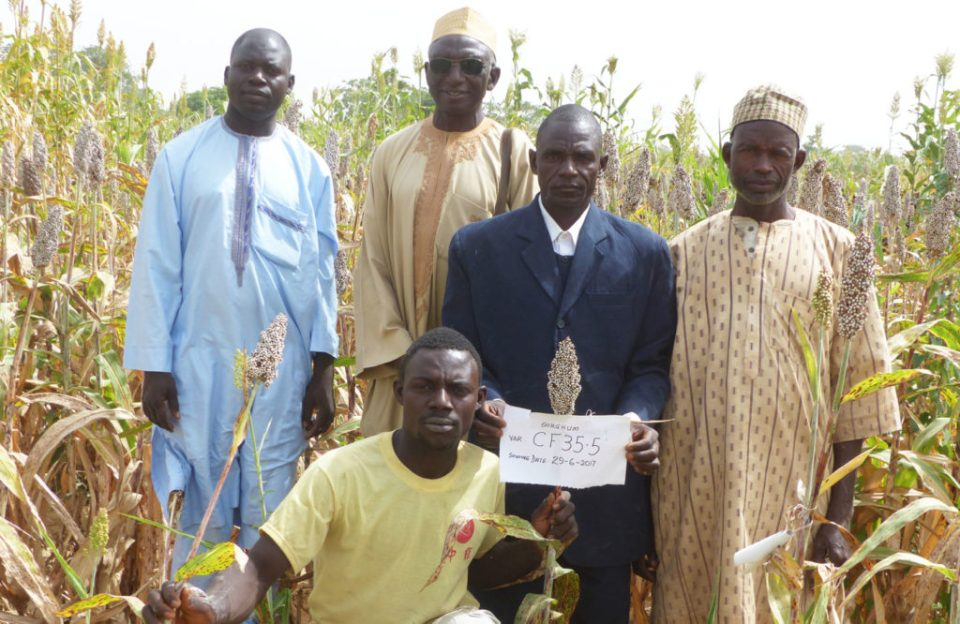 Abdullahi Shehu (standing second from right) with other farmers interested in the improved variety CF35.5 PC: M. Magassa, ICRISAT