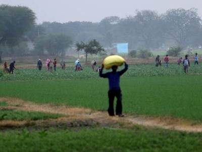 """The focus is now on the """"profitability"""" rather than simply the """"productivity"""" aspect of farming. (Express Photo/Praveen Khanna)"""