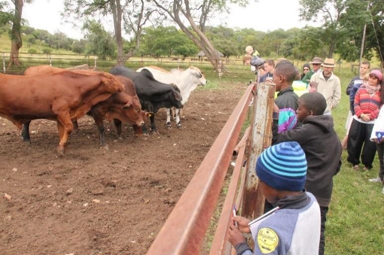 Cattle breeds at Matopos Research Institute oto: ICRISAT Bulawayo