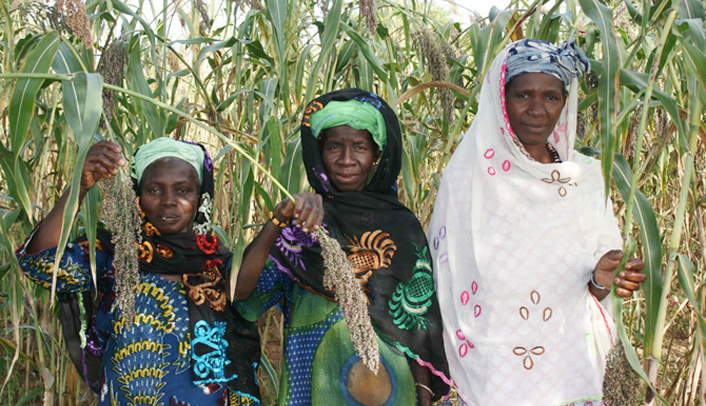 Beneficiaries of the Africa RISING's large-scale diffusion of technologies for sorghum and millet systems (ARDT-SMS) in a sorghum field in Sikasso region of Mali. Photo: ICRISAT