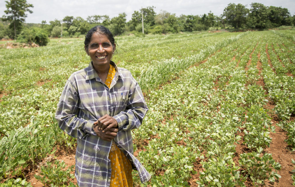 A GROUNDNUT FARMER IN INDIA. NEW VARIETIES DEVELOPED WITHOUT CONSIDERING WOMEN'S NEEDS OR PREFERENCES COULD HAVE A NEGATIVE IMPACT ON THEIR WELL-BEING. PHOTO: ICRISAT