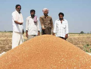 Indian farmers with newly harvested pulses. Photo: ICRISAT