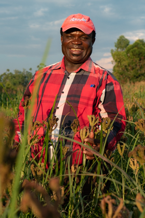 Dr. Chrispus Oduori grew up in Western Kenya eating ugali, an African dish made of finger millet flour, cooked in boiling water (or milk) to a dough-like consistency. He has spent a lifetime breeding and promoting the crop. Photo: Michael Major/Crop Trust