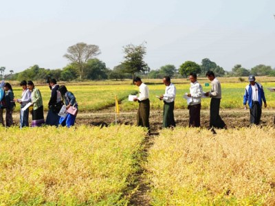 Farmers at Zaloke Reserach Farm inspecting chickpea varieties. Photo: ICRISAT