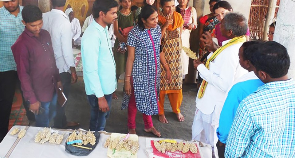 Dondi Ram of Chintakara village identified the prolific branching in the semi-compact panicles of Phule Chitra as a preferred trait. Photo credit: Suresh K, ISD-SACSA