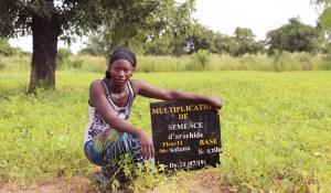 Ms Massaran Camara in her seed multiplication plot at Siby. Photo: Magassa M, ICRISAT