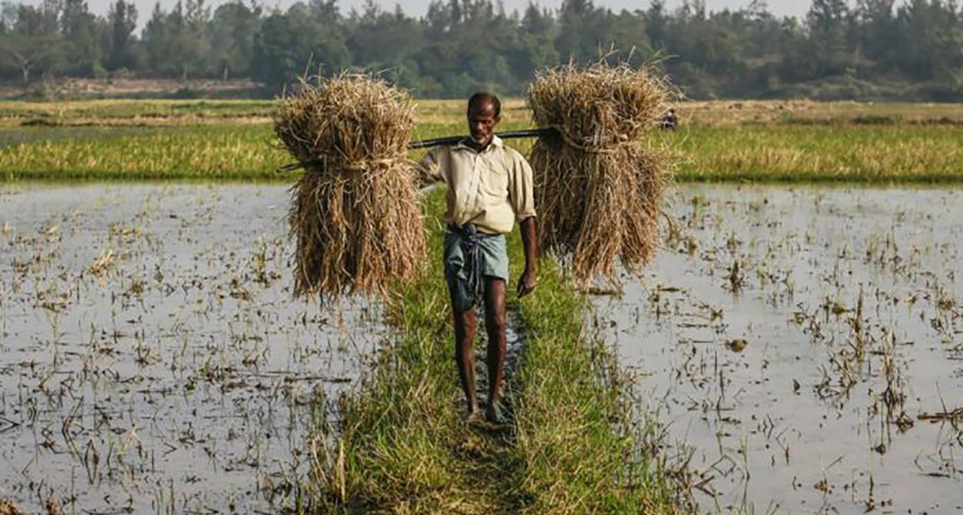 Representational image for Indian agriculture. Photo: Prashanth Vishwanathan