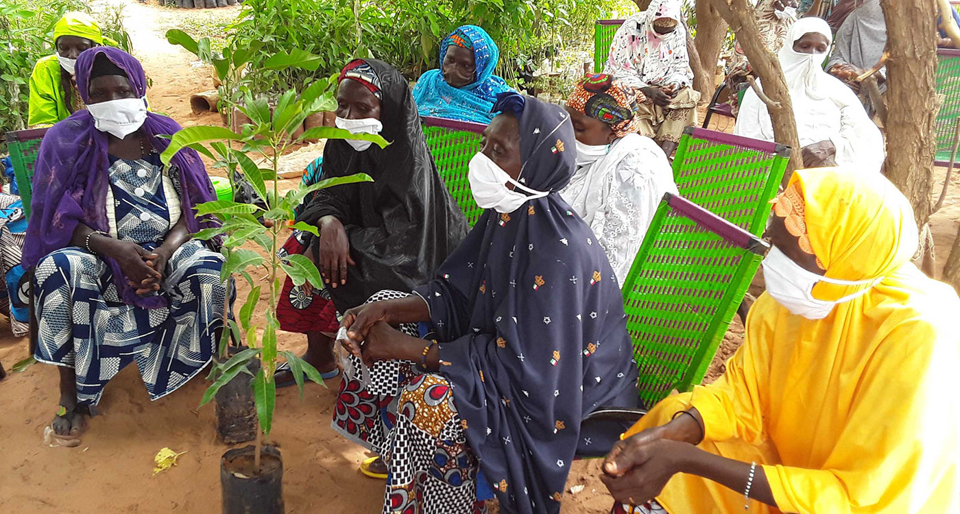 Women farmers during a grafting demonstration in Niger.