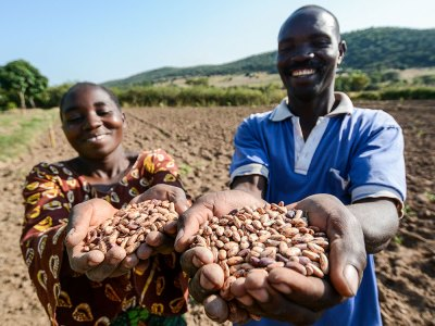 The Bakukus on their farm in Tanzania. The farmer couple are beneficiaries of the TL projects. They increased their family income with seed production and improved bean grain has enabled them to rear cattle and pigs, grow avocado and invest in a bio-gas plant. Photo: Tropical Legumes Hub