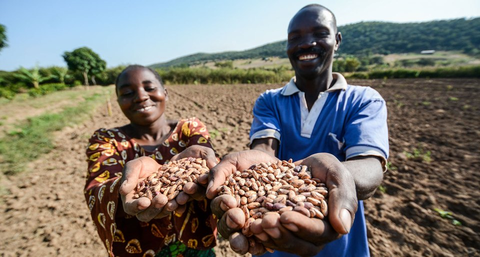 The Bakukus on their farm in Tanzania. The farmer couple are beneficiaries of the TL projects. They increased their family income with seed production and improved bean grain has enabled them to rear cattle and pigs, grow avocado and invest in a bio-gas plant. Photo:  Alliance of Bioversity International and CIAT