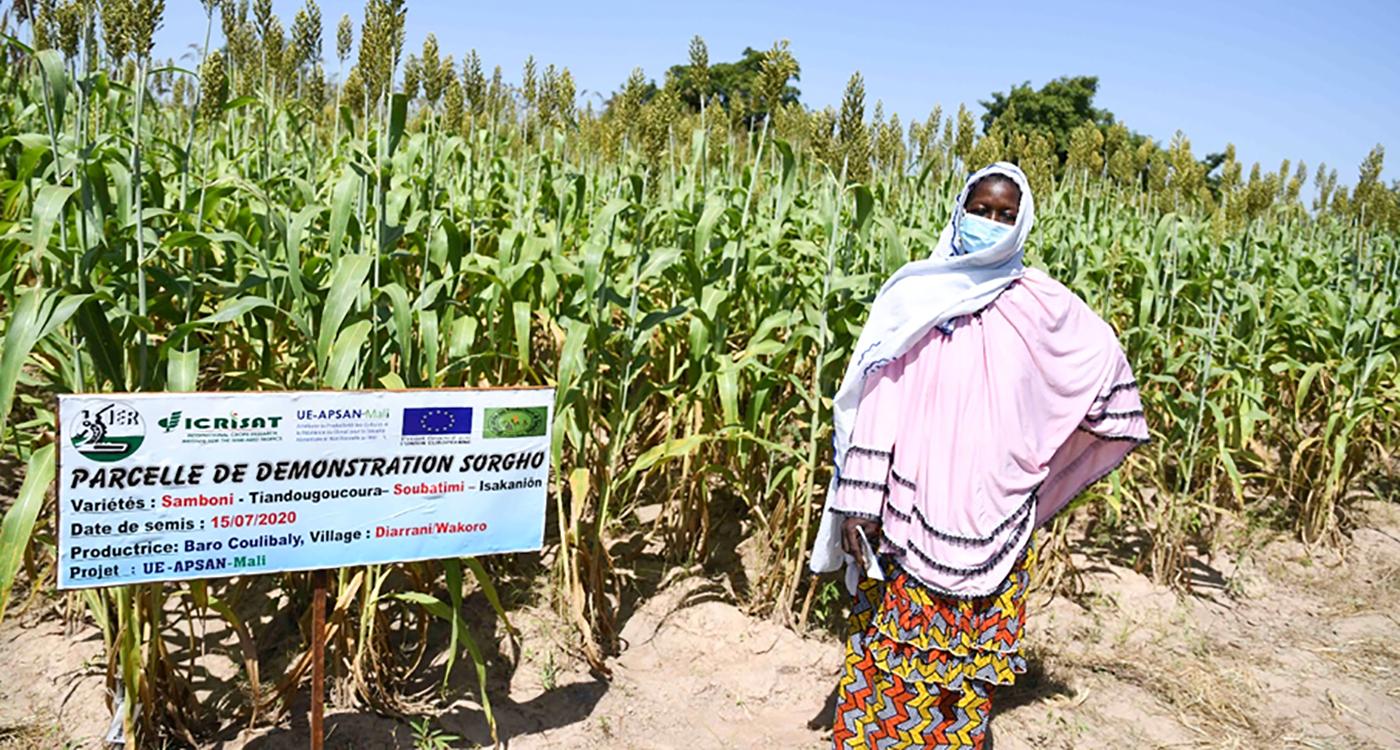 Mrs Baro Coulibaly, a sorghum tester, in her farm in Wacoro, Mali. Photo: ICRISAT