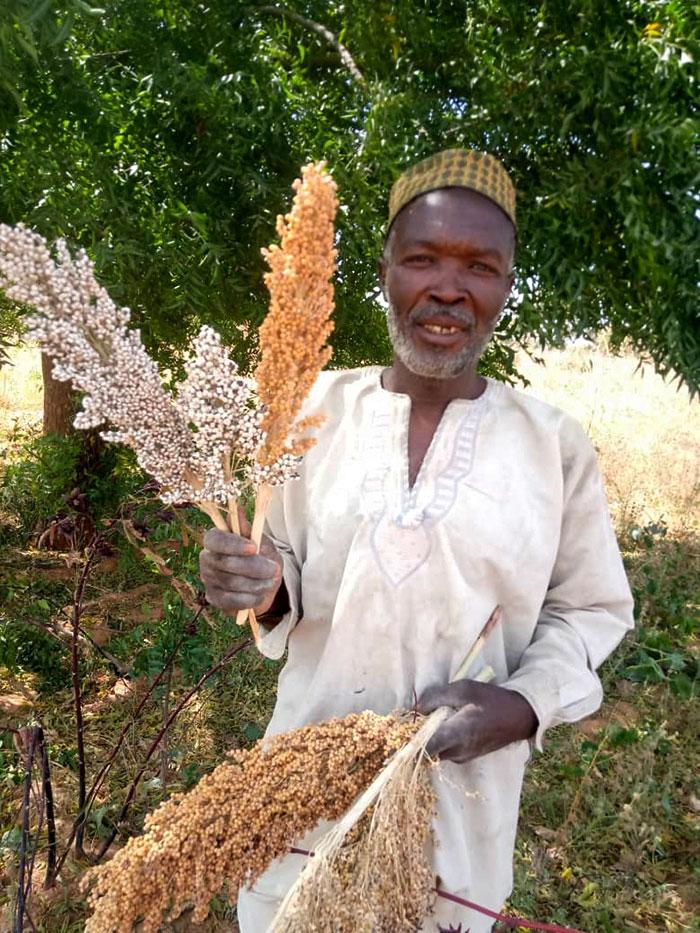 Mr Dalhatu Mohammad, sorghum and groundnut farmer. Photo: L Bala, ICRISAT Nigeria