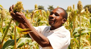 A sorghum farmer in Tanzania. File photo