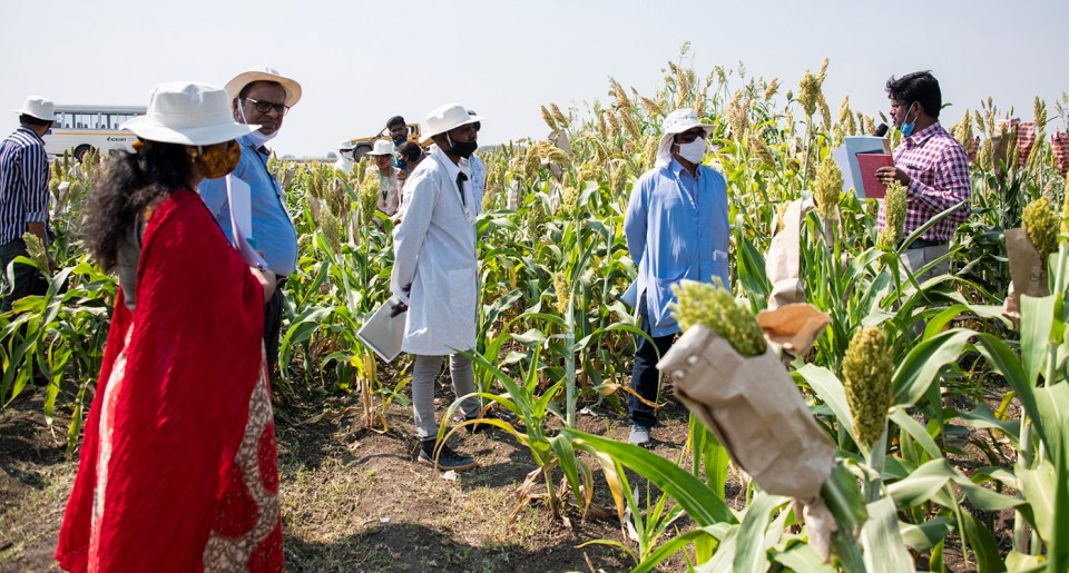Dr Govindaraj guiding other sorghum researchers through the field. Photo: PS Rao, ICRISAT