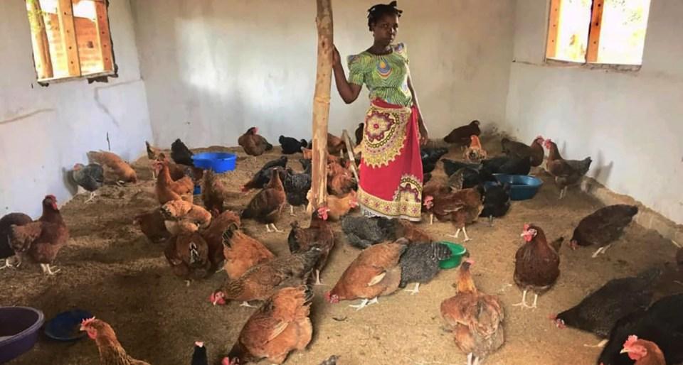 Kuroiler chicken at Zaone Poultry Company Photo: Ken Gunsalu
