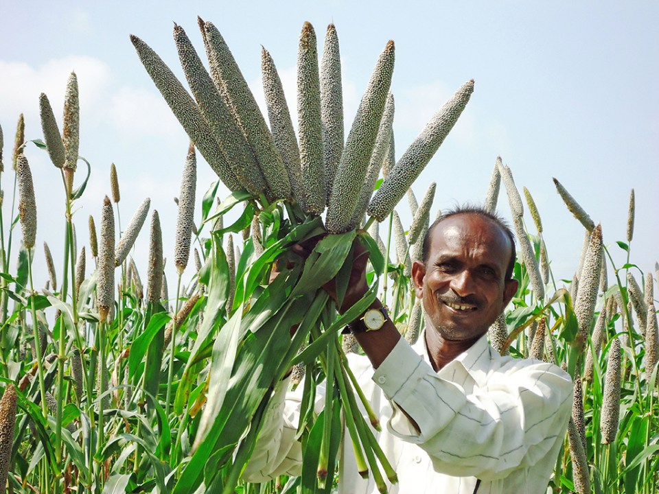 A farmer in India shows his pearl millet crop. Photo: ICRISAT