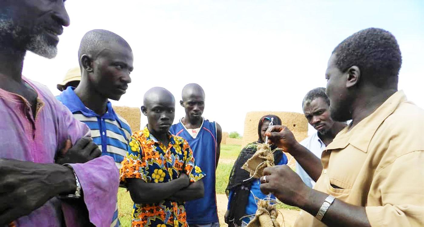 Mr Boukari Haraouna of Tera's parasitoids production unit explaining the biological control program of millet head miner to fellow farmers. Photo: L Karimoune, ICRISAT
