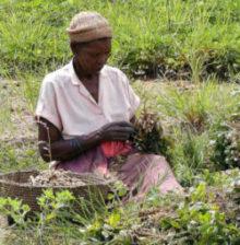 Womens-Crop-blog-featured-image-e1458850129993-295x300