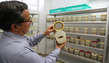 insect assya laboratory