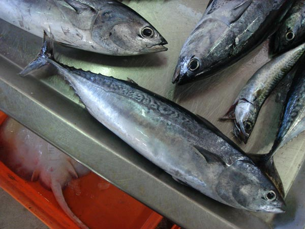 Image of fresh tulingan or bullet tuna in the wet market
