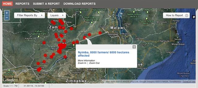 zambia_army_worms